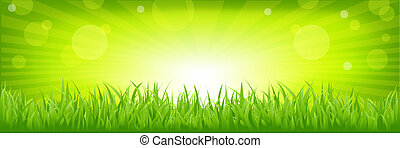 Grass With Green Background - Panorama With Green Grass