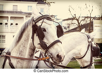 Horses in harness on a city street with retro filter effect...