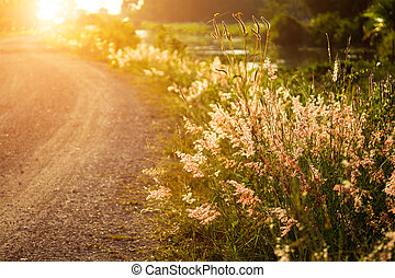 wild grass in sunset counterlight at country road