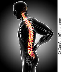 Anatomy of male back pain on gray - 3d rendered illustration...