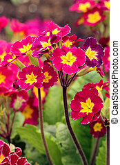 colorful spring flowers growing in garden