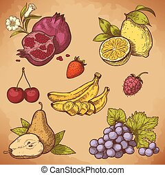vector engraving sweet fruits - vector illustration of...