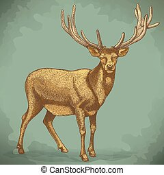 vector engraving of reindeer retro - vector illustration of...
