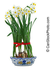 White daffodils in vase, decor with red ribbon in isolated...