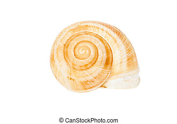 Beige spiral shell isolated on white background
