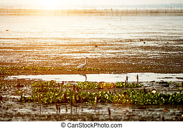 Egret in the lake and sunset light.