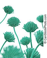 Aspergillus mold - Scientific illustration - aspergillus...