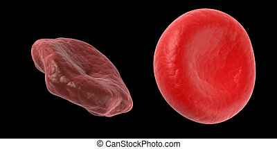 Healthy and unhealthy blood cell - Scientific illustration -...