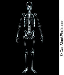 Male body x-ray front view