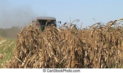 Combine Harvesting Corn 05 - Combine harvesting corn crop.
