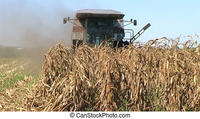 Combine Harvesting Corn 06 - Combine harvesting corn crop.