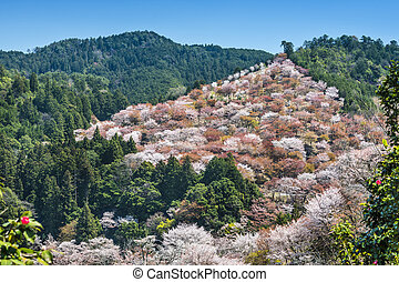 Yoshinoyama Japan - Yoshino, Japan cherry blossoms on the...