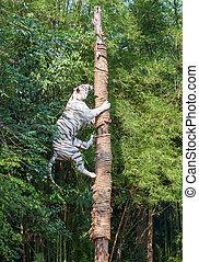 White tiger climbing trees show of Thailand
