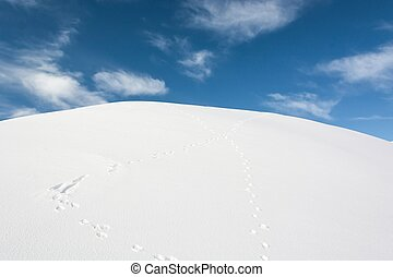 Rabbit tracks in snow - Tracks of a rabbit on a snow
