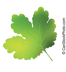 Vector currant leaf. EPS10. - Vector currant green leaf....