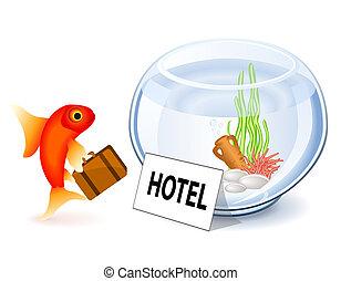 Goldfish Hotel - Goldfish arriving at the hotel