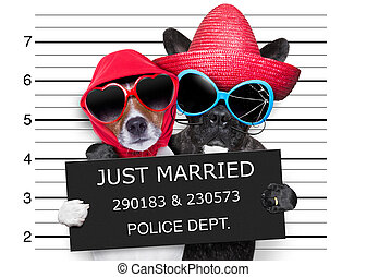 just married mugshot - two dogs just married and together in...