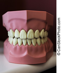 dental replica - plastic replica of mouth