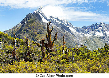 magnificent landscapes of New Zealand - magnificent fabulous...