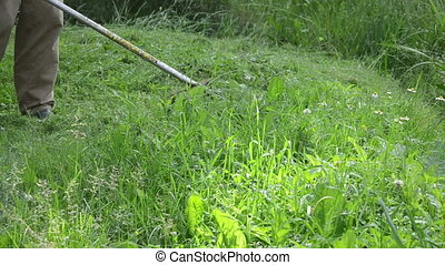 man trimmer cut grass - Closeup of meadow grass and garden...