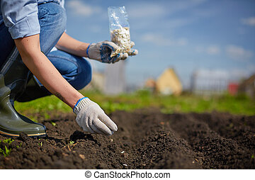 Sowing seed - Image of female farmer sowing seed in the...