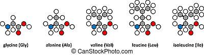 Glycine, alanine, valine, leucine and isoleucine amino...