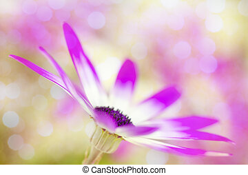 Dreamy fuchsia daisies with blur - Vivid fuschia and white...
