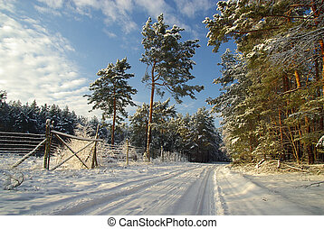 forest in winter 01