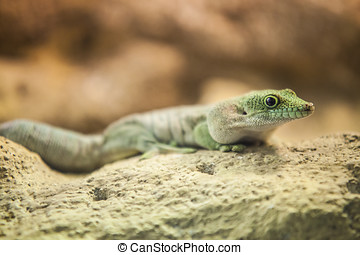 exotic lizard in desert background