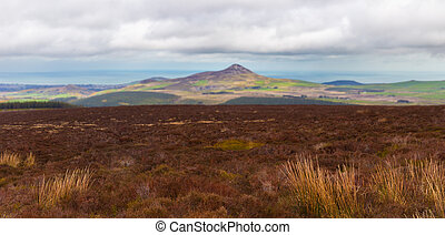 Panoramic view of heathland and Sugar Loaf in Wicklow