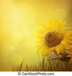 Summer sunflower background