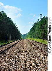 railroad tracks among forest