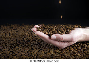 coffe beans - female hand catching coffee beans