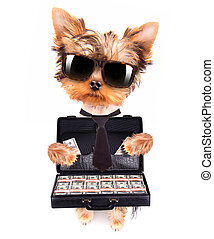 puppy with glasses holding case with money - cute little...