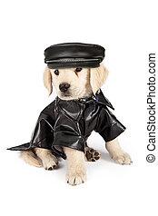 Golden Retriever Puppy Bad Dog - Golden Retriever puppy with...