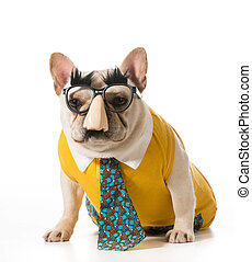 dog wearing human disguise - french bulldog disguised as a...