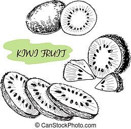 Kiwi fruit. Set of hand drawn illustration