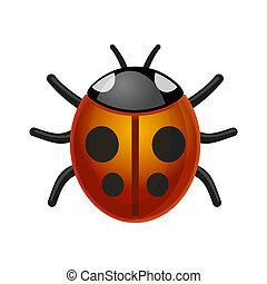 Ladybird Bug on White Background Vector - Ladybird Bug on...