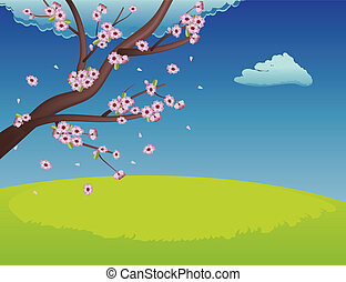 Sakura on Grass Field - Spring background with green grass...