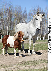 Big horse with pony friend - Big white warmblood horse with...