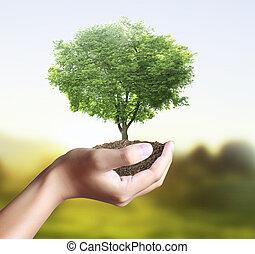 pequeno, árvore, planta, mão