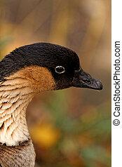 Wild-goose in autumn in the nature