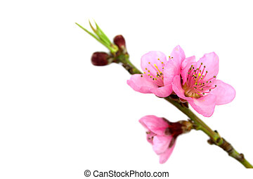 Spring flowers , on white background
