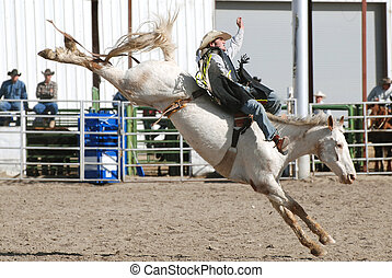Cowboy on Bucking Bronc - Young cowboy riding a white...