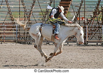 Cowboy on Bronc - Young cowboy riding a white bucking horse...