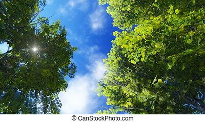 Green foliage and sunny sky