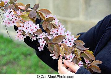 flower of cherry plum 03