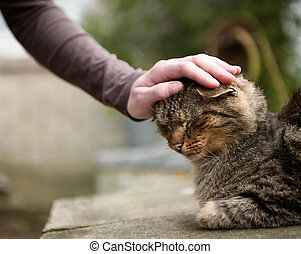 gentle stroke - womens hand gently stroking domestic cats...