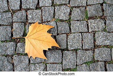 Road paving stones and brown leaf