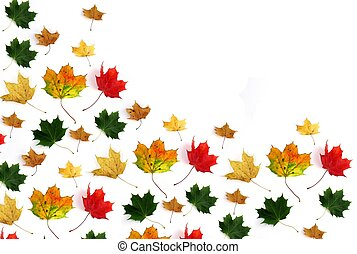 Colorful leaves on white background.